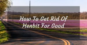 How To Get Rid Of Henbit For Good