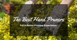 A Clean-Cut Branch – The Best Hand Pruners on the Market