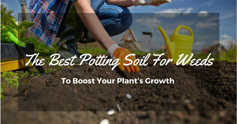 best-potting-soil-for-weeds