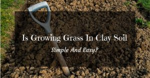 Is Growing Grass In Clay Soil Simple And Easy?
