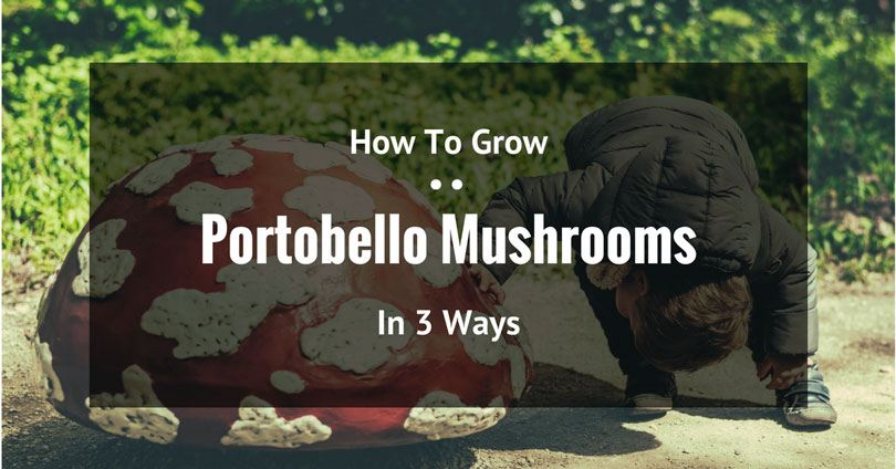 how-to-grow-portobello-mushrooms