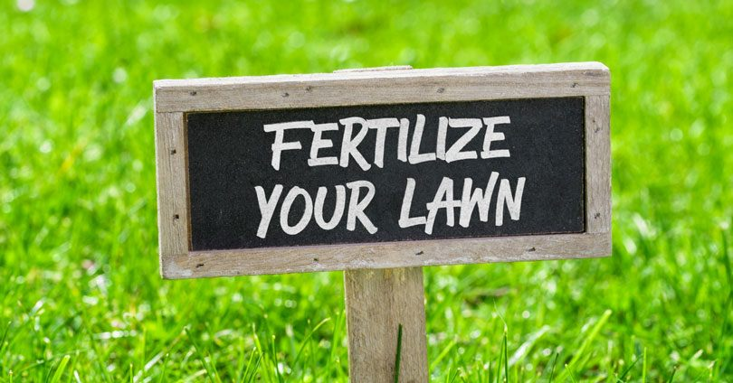 best-lawn-fertilizer