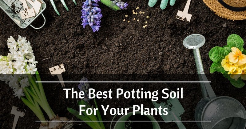 best-potting-soil