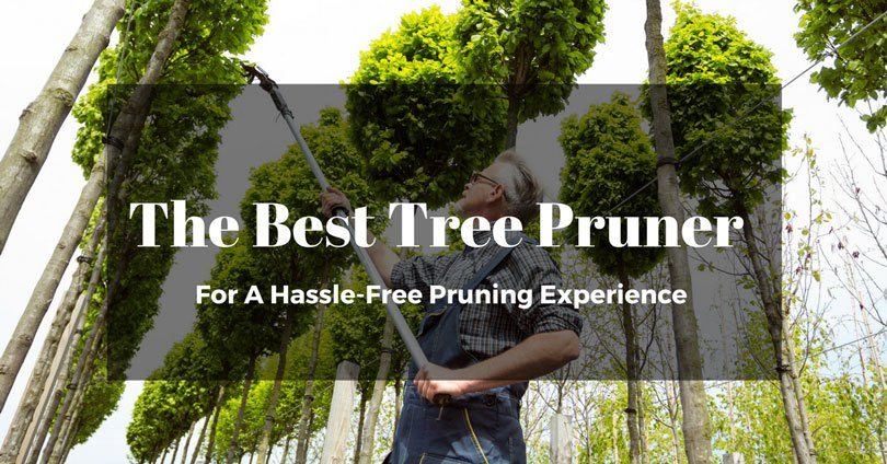 best-tree-pruner