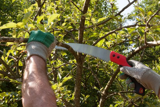best-pruning-saw-use