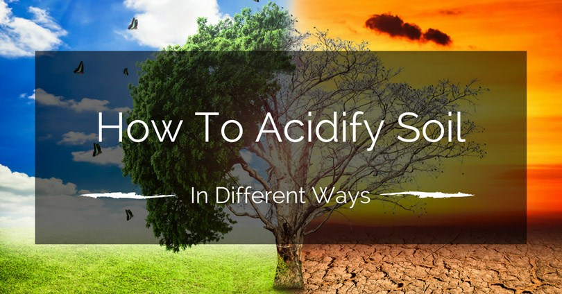 how-to-acidify-soil