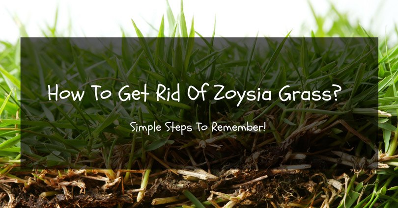 how-to-get-rid-zoysia-grass