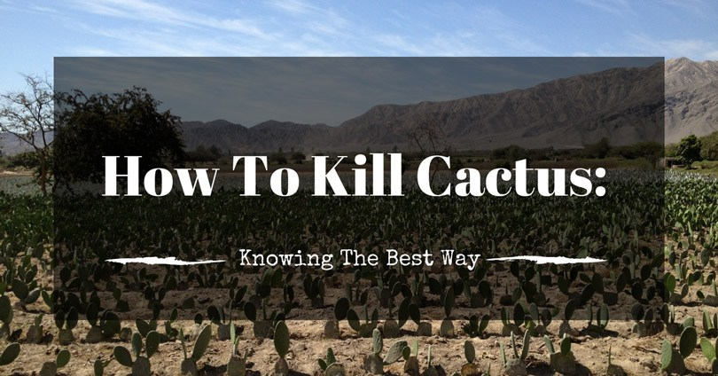 how-to-kill-cactus