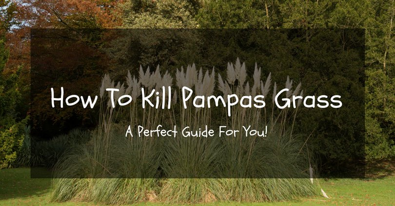 how-to-kill-pampas-grass