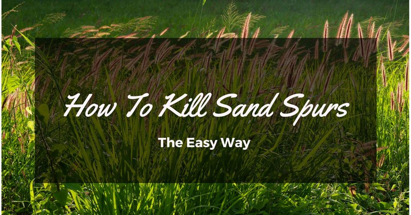 how-to-kill-sand-spurs