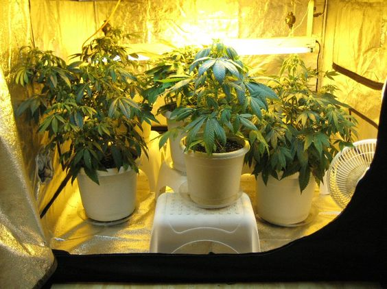 & The Best Grow Tents For Optimal Yield