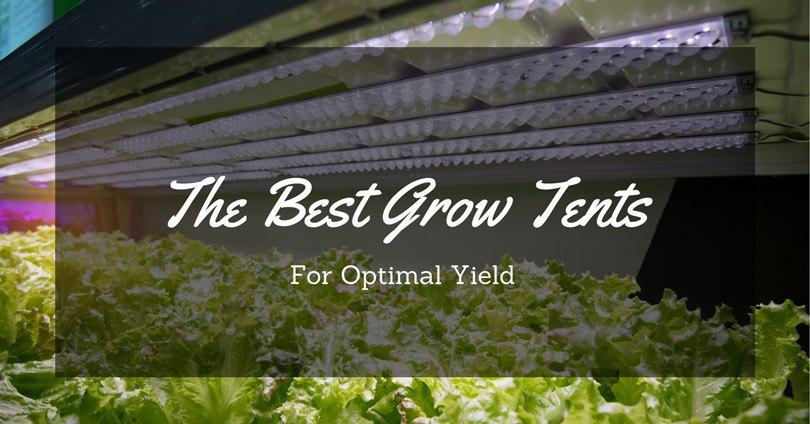 best-grow-tents