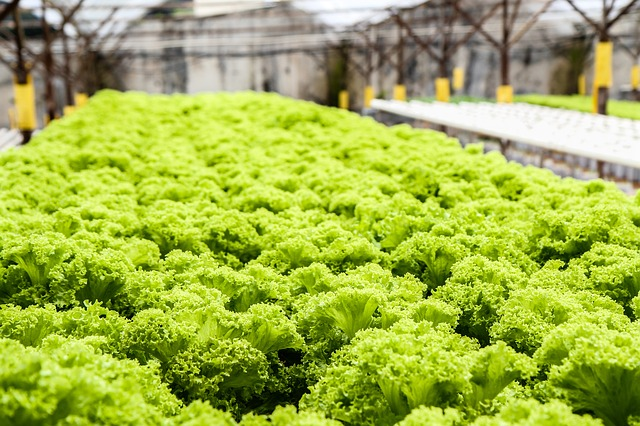 best hydroponic nutrients for leafy greens