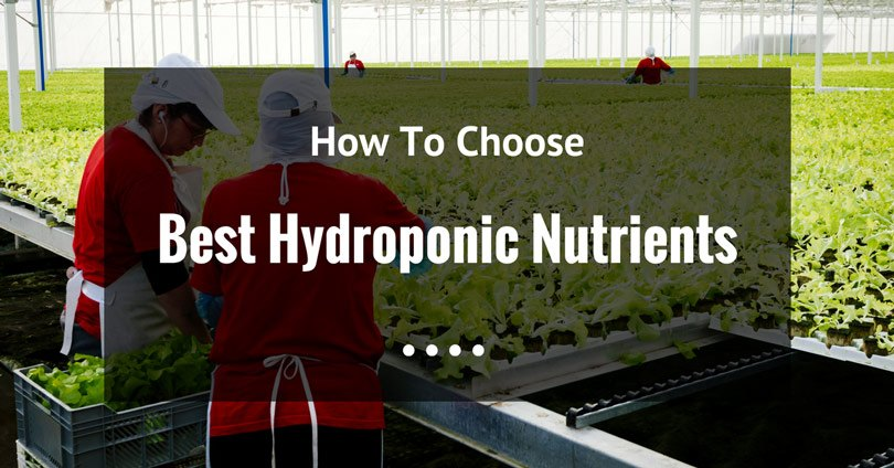 best-hydroponic-nutrients