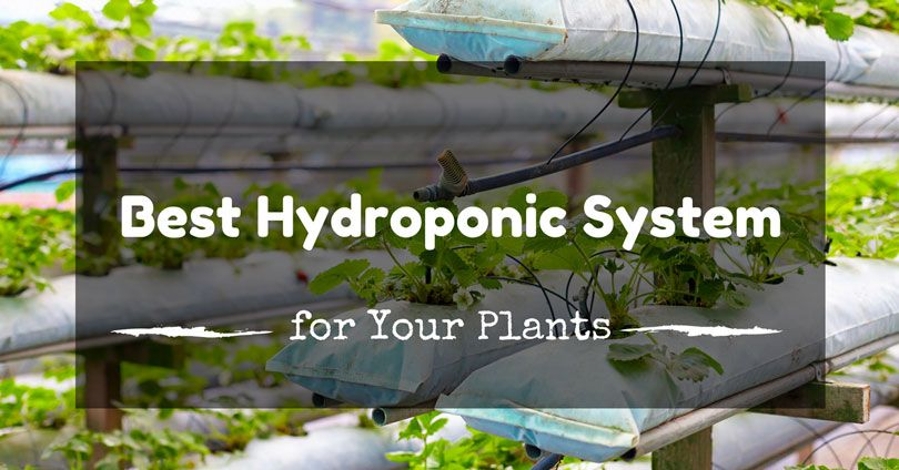 best-hydroponic-system