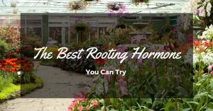 Which is the Best Rooting Hormone for Plants in Your Backyard?