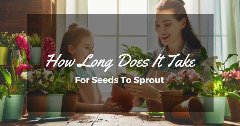 How Long Does It Take For Seeds To Sprout