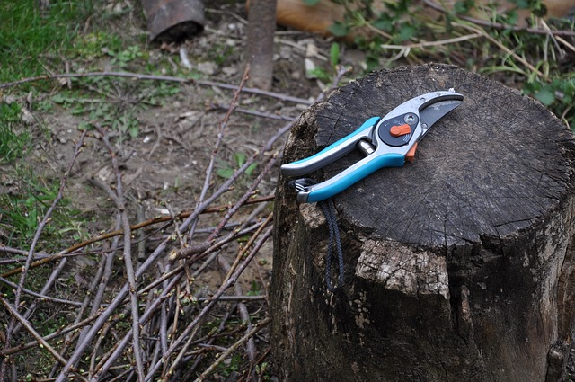 Varieties-of-Pruning-Tools