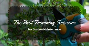 The Best Trimming Scissors For Garden Maintenance