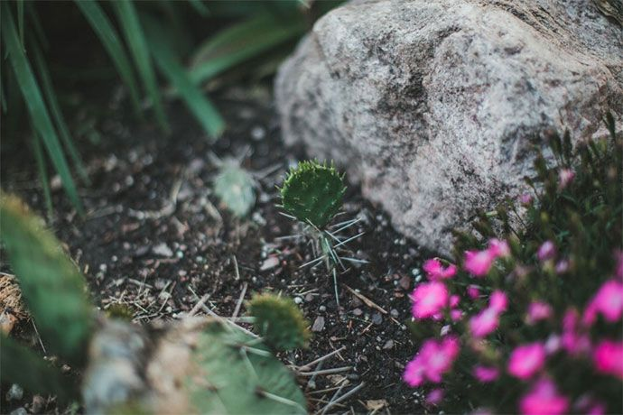 how to kill cactus in your yard
