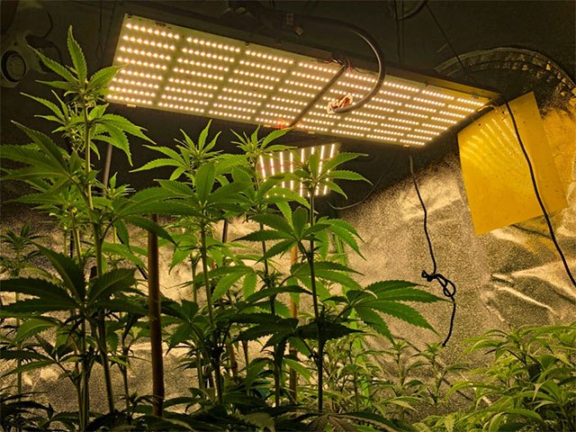 best grow tent setup