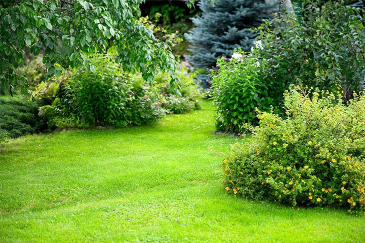how to remove shrubs and roots