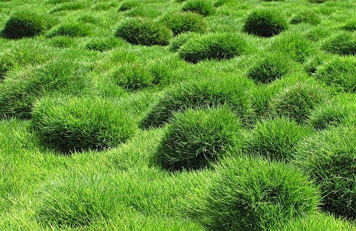 how to get rid of zoysia grass lawn