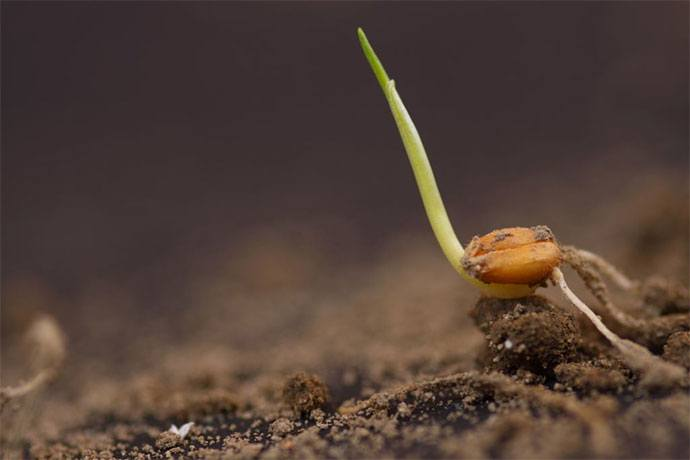 how long does it take for vegetable seeds to sprout
