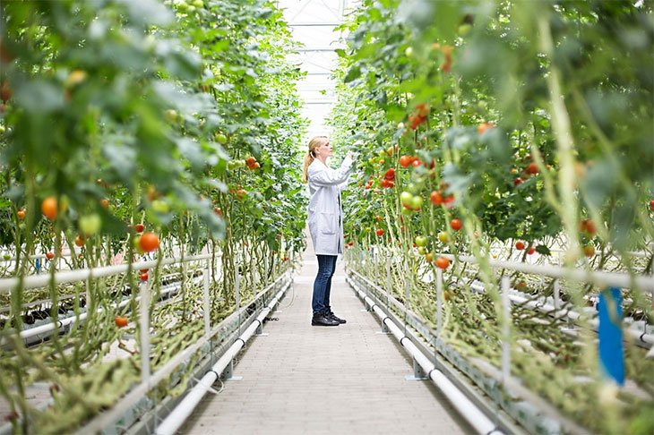 best hydroponic nutrients for tomatoes
