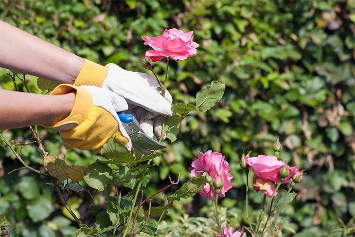 best pruning shears for roses