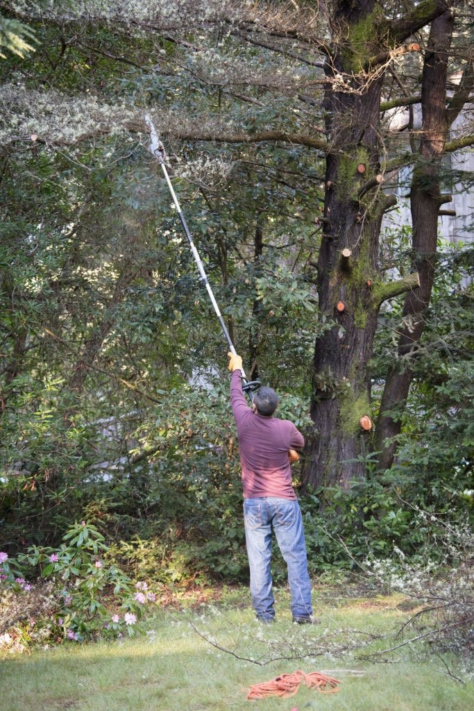 best gas pole saws for the money