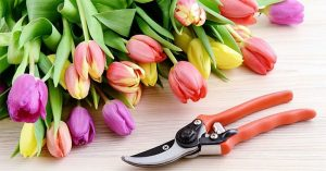 An Easy-Cut Tool – The Best Pruning Shears